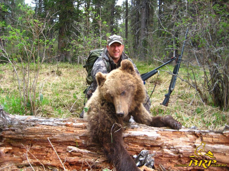 Алтай-Grizly.jpg
