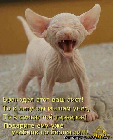 1365821156_kotomatrix_33.jpg