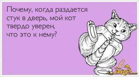 1390466864_prikolnullnye-aktrytki-1-032.jpg