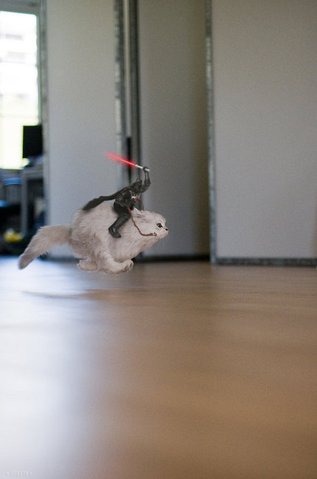 darth-on-cat.jpg